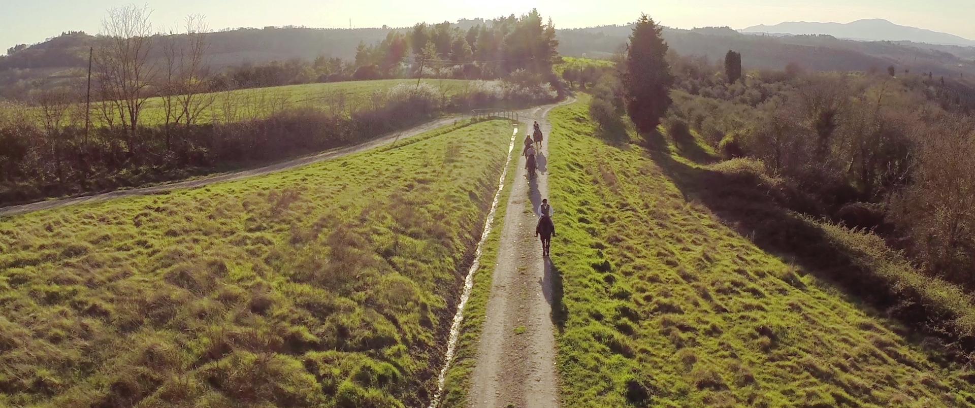 outdoor-horses